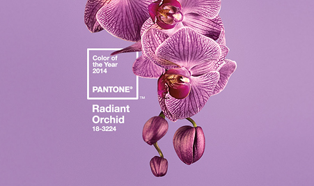 Pantone divulga a cor para 2014: orquídea radiante